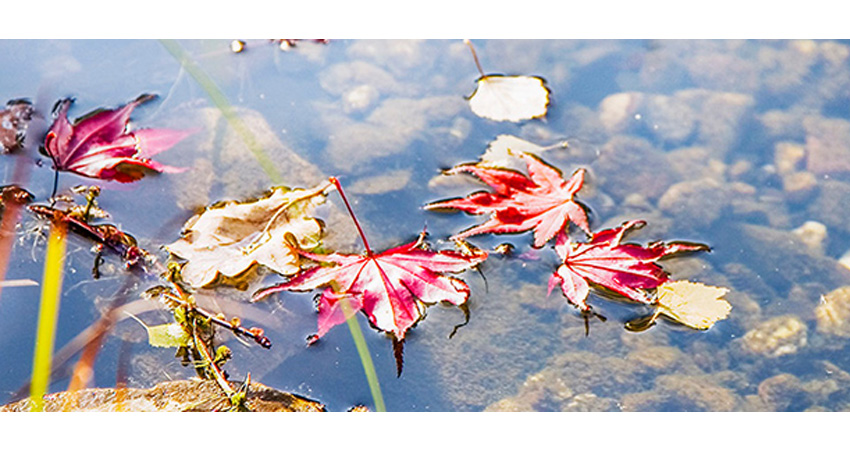Teich mit Blättern drin